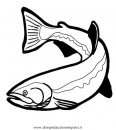 animali/pesci2/trota_03.JPG