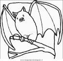 animali/pipistrelli/pipistrello_11.JPG