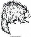 animali/roditori/istrice_porcospino_06.JPG