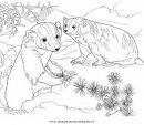 animali/roditori/tasso_tassi_badger_05.JPG