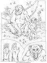 animali/scimmie/animali_misti_018.JPG