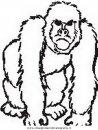 animali/scimmie/scimmia_12.JPG