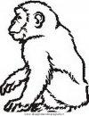animali/scimmie/scimmia_13.JPG