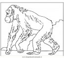 animali/scimmie/scimmia_23.jpg