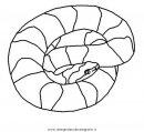 animali/serpenti/serpente_56.JPG