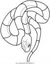 animali/serpenti/serpente_a7.JPG