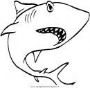 animali/squali/squalo_squali_02.JPG