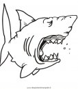 animali/squali/squalo_squali_51.jpg