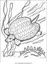 animali/tartarughe/tartaruga_02.JPG