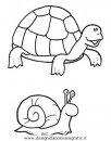 animali/tartarughe/tartaruga_04.JPG