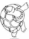 animali/tartarughe/tartaruga_15.JPG