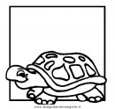 animali/tartarughe/tartaruga_43.JPG