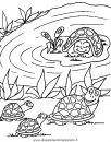 animali/tartarughe/tartaruga_45.JPG