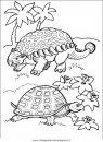 animali/tartarughe/tartaruga_tartarughe_05.JPG