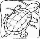 animali/tartarughe/tartaruga_tartarughe_08.JPG