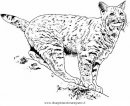animali/tigri/lince_linci_10.JPG