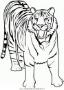 animali/tigri/tigre_07.JPG