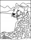 animali/tigri/tigre_09.JPG