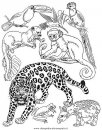 animali/tigri/tigre_16.JPG