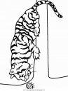 animali/tigri/tigre_26.JPG