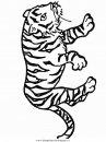 animali/tigri/tigre_27.JPG