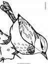 animali/uccelli/cactuswren.JPG