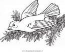 animali/uccelli/cardellino_0.JPG