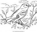 animali/uccelli/cardellino_1.JPG