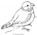 animali/uccelli/fringuello_1.JPG