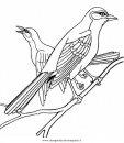 animali/uccelli/fringuello_3.JPG