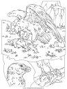 animali/uccelli/uccelli_001.JPG
