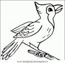 animali/uccelli/uccelli_039.JPG