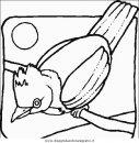 animali/uccelli/uccelli_042.JPG