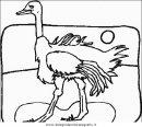 animali/uccelli/uccelli_053.JPG
