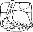 animali/uccelli/uccelli_058.JPG