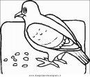 animali/uccelli/uccelli_061.JPG