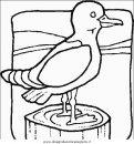 animali/uccelli/uccelli_064.JPG