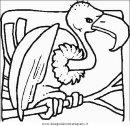 animali/uccelli/uccelli_070.JPG