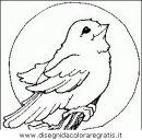 animali/uccelli/uccelli_078.JPG