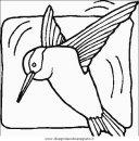 animali/uccelli/uccelli_127.JPG
