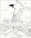 animali/uccelli/uccelli_132.JPG