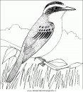 animali/uccelli/uccelli_133.JPG