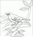 animali/uccelli/uccelli_134.JPG
