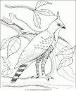 animali/uccelli/uccelli_138.JPG