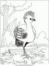 animali/uccelli/uccelli_139.JPG