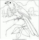animali/uccelli/uccelli_141.JPG