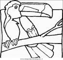animali/uccelli/uccelli_163.JPG