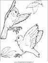 animali/uccelli/uccelli_175.JPG