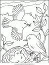 animali/uccelli/uccelli_180.JPG
