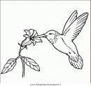animali/uccelli/uccelli_185.JPG